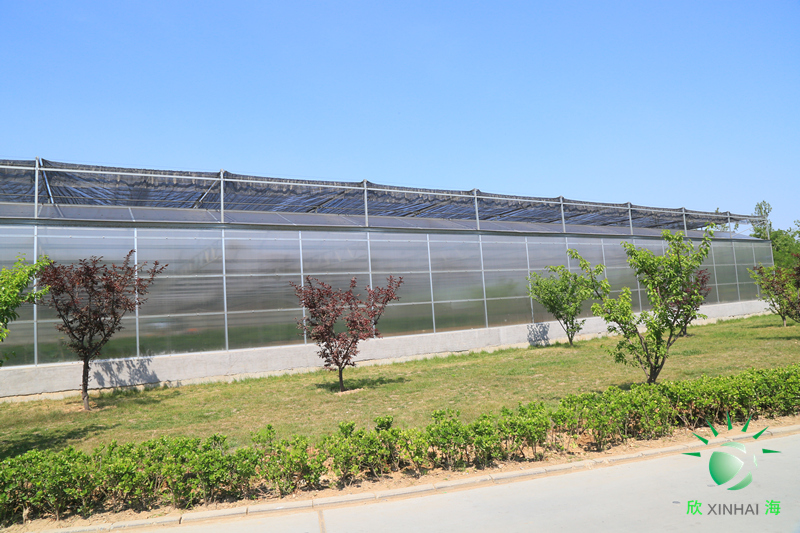 阳光板温室