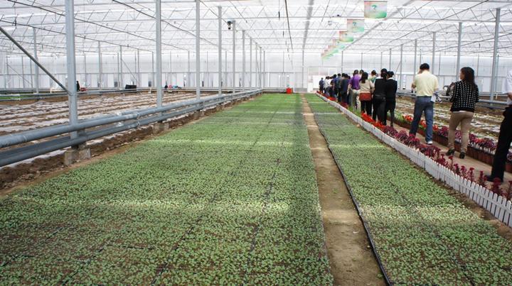 佳圣现代农业科技园温室