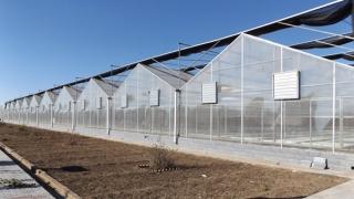 张家口绿世界农业科技有限公司两万平米育苗亚搏在线登录网页版温室
