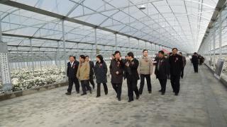 廊坊远村农业十万平米连栋温室