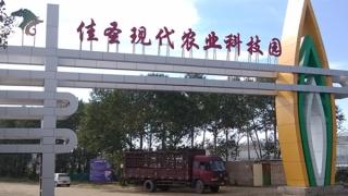 张北县佳圣现代农业科技园8万平方米温室亚搏在线登录网页版